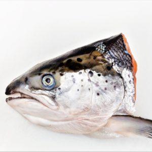 SalmonHead