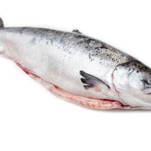 Whole Scottish salmon fish (3.6kg ) isolated on a white studio background.