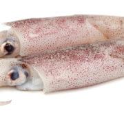 SquidWhole