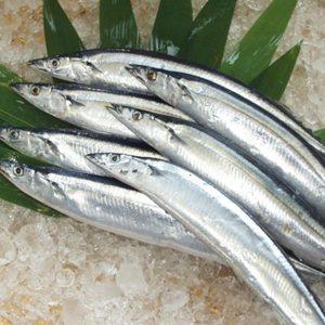 日本秋刀魚