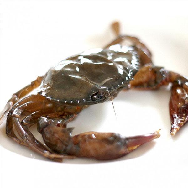 软壳蟹 1